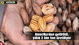Amerika'dan getirildi, yıllık...