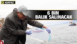Körfez'e 6 bin balık daha salınacak