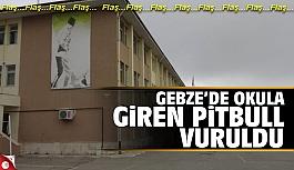 Okula giren köpek vurularak öldürüldü