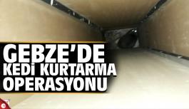 Gebze'de hamile kedi kurtarma operasyonu