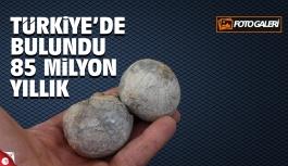 Türkiye'de bulundu 85 milyon yıllık