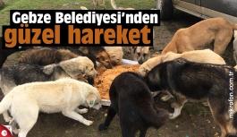 Gebze Belediyesi köpekleri besliyor