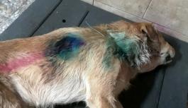 Caniler köpeği tüfekle vurdu