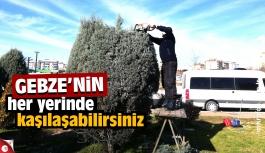 Gebze'de ağaç budama seferberliği