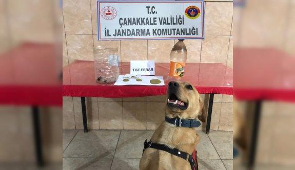 Uyuşturucu operasyonu: 2 gözaltı