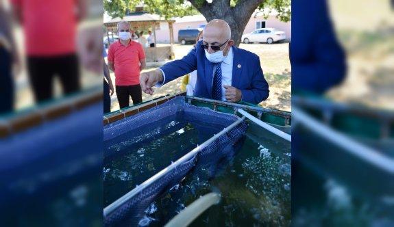 Çanakkale'de 10 bin çipura yavrusu denize bırakıldı