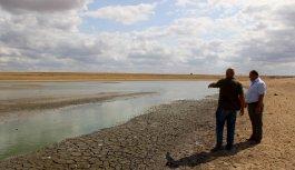 Edirne'de su seviyesi düşen gölette oksijensiz kalan yüzlerce balık telef oldu