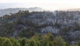 GÜNCELLEME - Kocaeli'de çıkan orman yangını söndürüldü