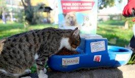 Bağcılar'da sokak hayvanları için mama bırakıldı