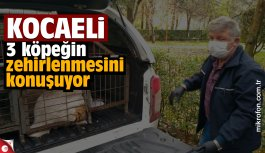 Kocaeli'de 3 köpeğin zehirlenerek öldürülmesine ilişkin belediye çalışanları açığa alındı