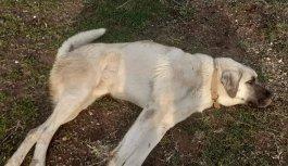 Bursa'da aracıyla köpeğe çarpıp yoluna devam eden sürücü düşürdüğü plaka sayesinde yakalandı