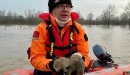 Edirne'de AFAD ekipleri taşkında mahsur kalan 3 köpek yavrusunu kurtardı