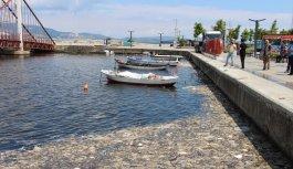Balıkesir'de müsilaj temizliği devam ediyor