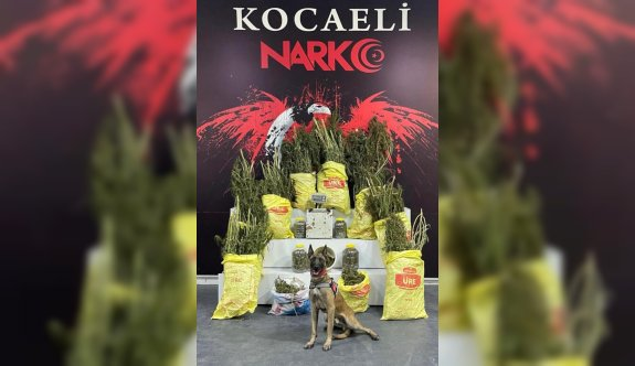 Kocaeli'de 33 kilo 450 gram esrar ele geçirildi