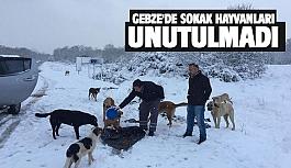 Gebze'de sokak hayvanları unutulmadı