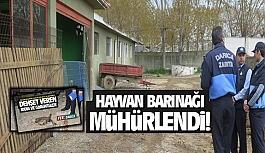 Darıca'daki hayvan barınağı mühürlendi!